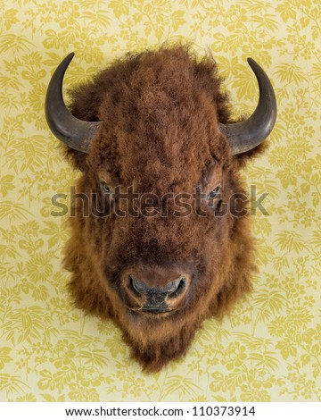 Bison head trophy on the wall of the  Chateau de Mores State Historic Site near Theodore Roosevelt National Park in Medora, North Dakota