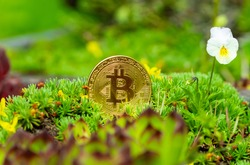 Bitcoin (BTC) in green flowerbed. Cryptocurrency ideas and future technology. digital currency money financial system, Impact of Bitcoin on environment.  cryptocurrency mining business