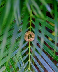 Bitcoin (BTC) in green tropical leaf. Cryptocurrency ideas and technologies of the future. digital currency, money, financial system, bitcoin's environmental impact. cryptocurrency mining business