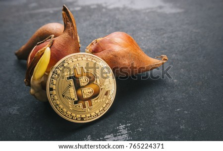 Shutterstock Bitcoin bubble cryptocurrency with Tulip bulbs -Tulip mania market crash concept image