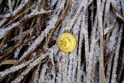 Bitcoin coin on a background of snowy grass and old leaves