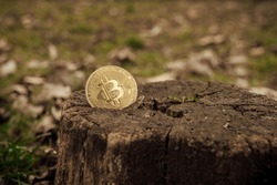 Bitcoin comes out of a tree trunk with a background of grass