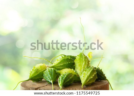 Bitter gourd fruits on top of wooden pole  with nature light bokeh background. (balsam apple, balsam pear, bitter cucumber, bitter gourd, bitter melon)