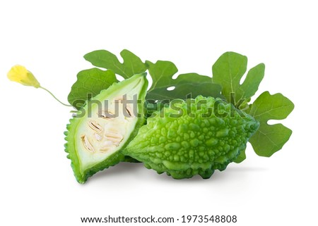 Bitter melon or bitter gourd isolated on white background with clipping path. Green fresh bitter melon or gourd is medicinal vegetable that prevent cancer. Bitter gourd or melon concept. Cut out.