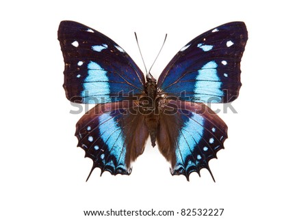 Black and blue butterfly Baeotus japetus isolated on white background