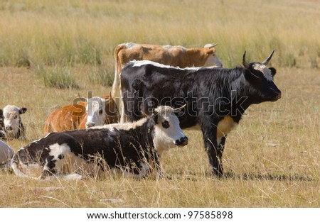 Black and brown cows on a pasture