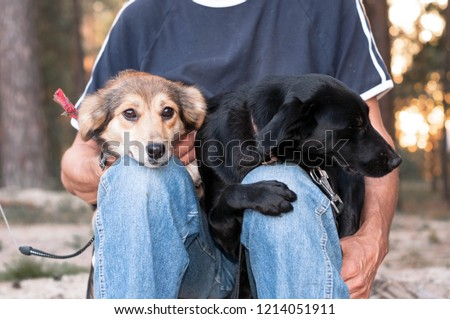 Black and brown dogs sitting on the owner's lap. Two dogs are sitting on the lap of a man in the woods. Brown and black dog sit in the woods in the hands of his master in the park #1214051911