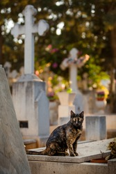 Black and ginger tabby yellow-eyed dreadful homeless cat sitting on a gray stoned grave at Limassol city cemetery, blurred graveyard on background