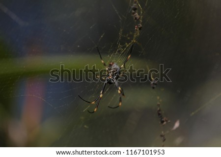 Black and gold spider in the middle of its web #1167101953