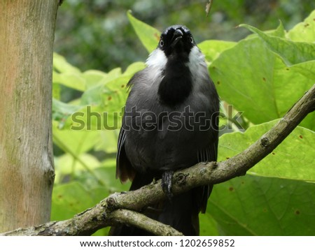 Black and gray bird perched in avian sanctuary #1202659852