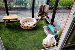 Black and green cat in a DIY cat patio,  catio in springtime. It keeps your cat secure and exercised outdoors and allow them fresh air. Safe enclosure for a cat