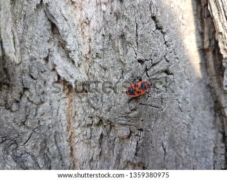 Black and orange beetle #1359380975