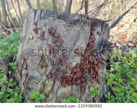 Black and orange beetle #1359380981