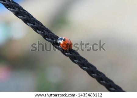 black and orange Beetle bug on the rope #1435468112