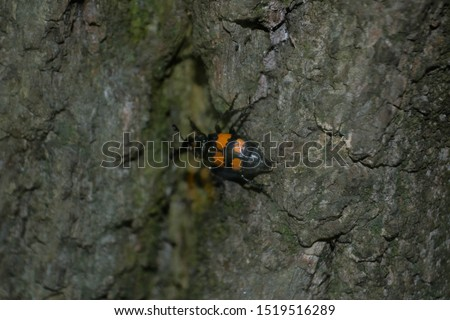 black and orange bug on a tree #1519516289