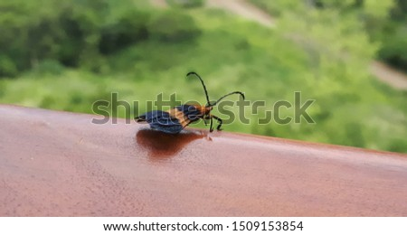 black and orange bug with background #1509153854