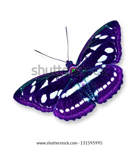 Black and purple butterfly flying isolated