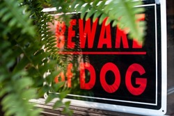 Black and Red Beware Of Dog Window sign in a front window with green soft-focus fern plant in the foreground. Homeowner signs, pets, home security system.