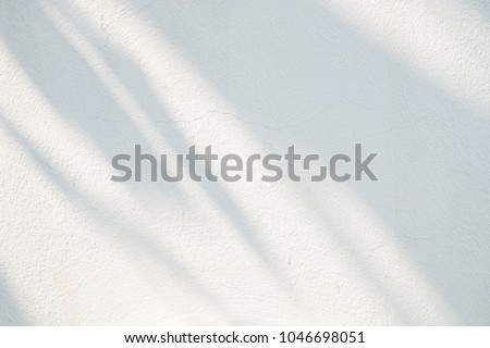 Black and White  abstract background textuer of shadows leaf on a concrete wall.