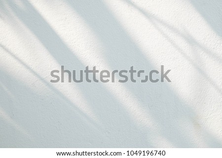 Black and White  abstract background textuer of shadows leaf on a concrete wall. #1049196740