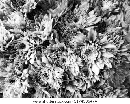 Free photos bunch of white tiny flowers avopix black and white background of flowers 1174336474 mightylinksfo