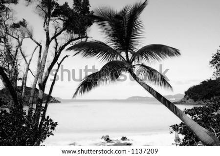 black and white beach photos. stock photo : Black and White