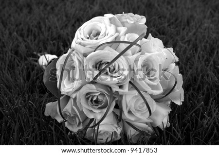 black and white photography roses. stock photo : Black and White