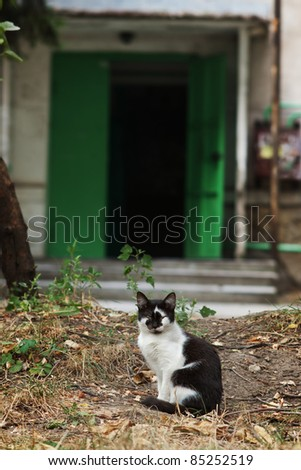 Black and white brindled cat outdoors on grass with out of focus green entrance door