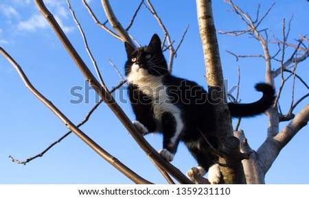 Black and white cat climbs on a bare tree against a cloudy sky close up #1359231110