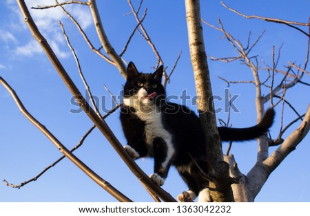 Black and white cat climbs on a bare tree against a cloudy sky close up #1363042232