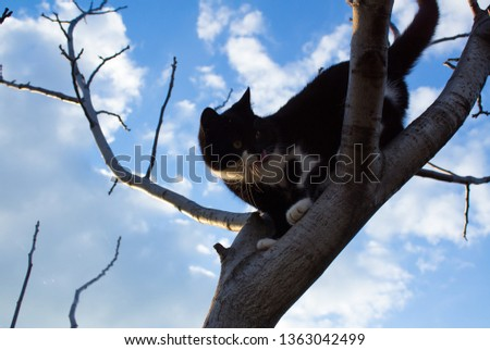 Black and white cat climbs on a bare tree against a cloudy sky close up #1363042499