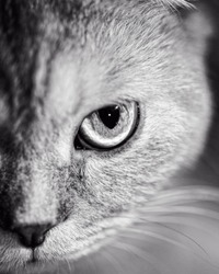 Black and white cat half portrait