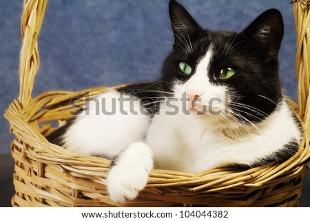 black and white cat in a basket