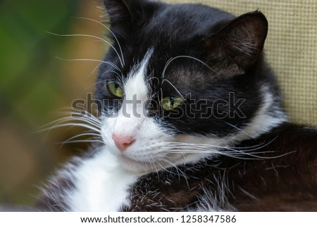 black and white cat in front of chainlink fence #1258347586