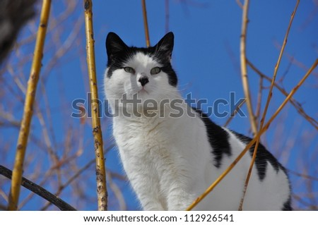 Black and White Cat in Willow Tree