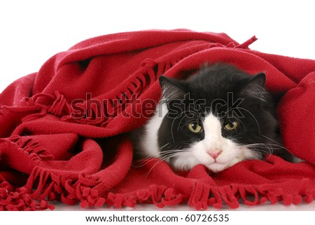 black and white cat laying under red blanket on white background