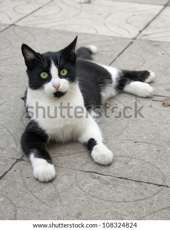 Black and white cat lies on stone  paving tiles