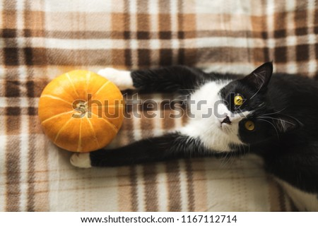 Black and white cat lying on plaid with pumpkin. Concept winter cozy comfort