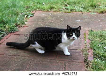 Black and white cat on a sidewalk