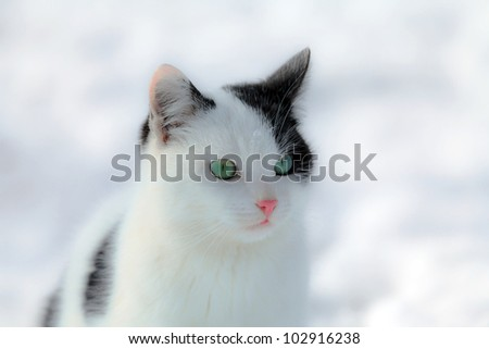 Black and white cat on snowy white background