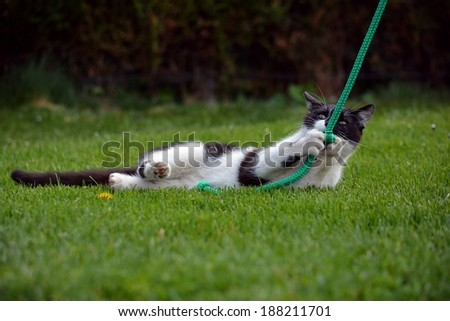 Black and white cat playing in the garden in the grass