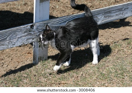 black and white cat rubbing up against fence