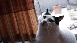 Black and white cat sitting at window on a rainy day.