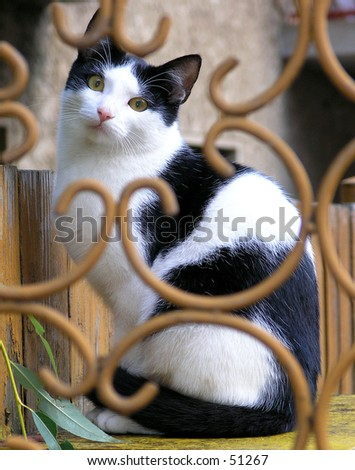 black and white cat sitting on seat