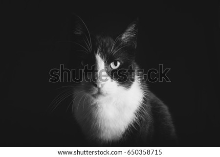 Black and white Cat studio pictures   #650358715