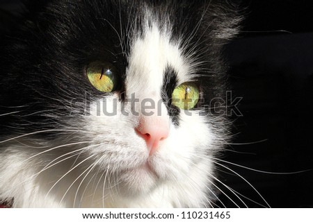Black and white cat with a spot on the face - stock photo
