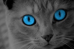 Black and white cat with bright blue eyes.