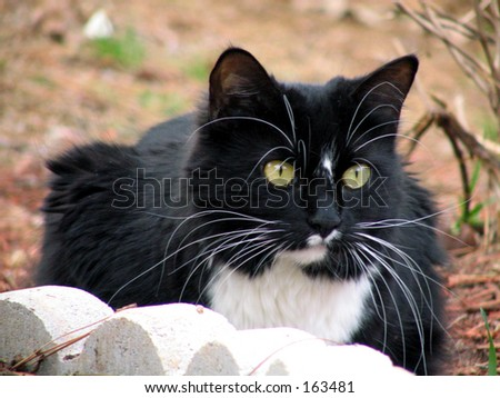 black and white cats with green eyes. white cat with green eyes