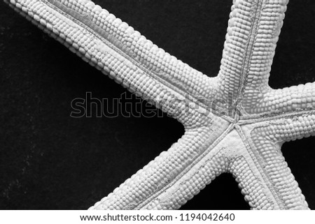 Black and white close up picture of a starfish on a dark background, selective focus.