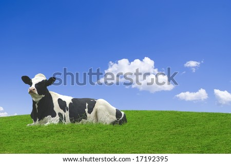 Black and white cow laid down in a green meadow against a blue sky.